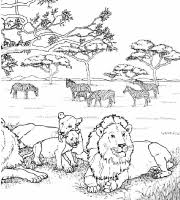 Mega Veel Kleurplaten 47 Natuur In Afrika Kleurplaten