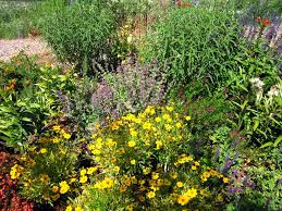 Small Picture Hummingbird Garden Plants Pictures Home Design Ideas