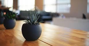 Lampade per piante da interno. Piccola Guida Alle Piante Da Appartamento Resistenti Zuccari