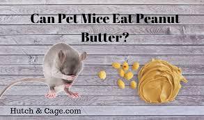 can mice eat peanut er 11 foods