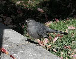 Seeing Things Backyard Bird Watch IVBackyard Bird Watch
