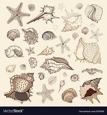 sea shells collection sea shells collection royalty free vector image