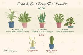 good and bad feng s plants