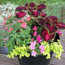 patio plants for shade shade container outdoor patio shade plants