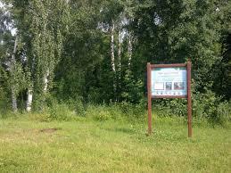 отчет Здесь наблюдается оползание берегов оврага под действием собственного веса Этому свидетельствует наклоненные деревья находящиеся на склонах Пьяный лес