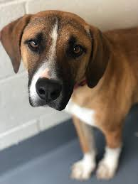 Meet sweet Lily! Lilly... - Hilton Head Humane Association | Facebook