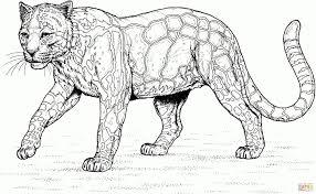 Sfoglia 20 Leopardo Da Colorare E Stampare Aestelzer Photography