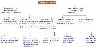 Plant Kingdom Classification Chart For Kids 23 Thorough Plant Kingdom Classification Chart For Kids