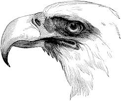 Small Picture Free Eagle Coloring Pages