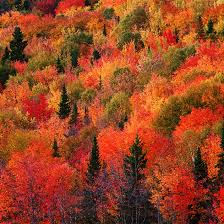 autumn mountains backgrounds. Fall-mountain-red-9-wallpaper Autumn Mountains Backgrounds