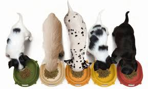 Top five Best Pet dog Foods Designed for Diabetic Dogs