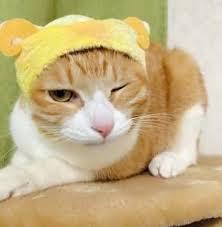 「岩井勇気猫」の画像検索結果