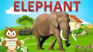 Bé học các con vật bằng Tiếng Anh | hình ảnh và tiếng kêu động vật |Dạy  tiếng anh cho trẻ em - YouTube