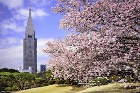 shinjuku gyoen 新宿御苑 is a national garden located in shinjuku area it s one of the best hanami cherry blossom viewing spots in tokyo