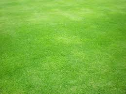 50 Free Grass Textures For Your Designs Pixelbell