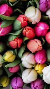 flower wallpaper for mobile phone.  Phone Tulips Bouquet Wallpaper To Flower For Mobile Phone F