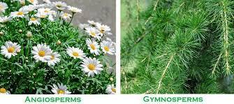 Angiosperm Vs Gymnosperm Venn Diagram Difference Between Angiosperms And Gymnosperms With Comparison
