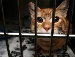 america s animal abuse problem petfinder america s animal abuse problem