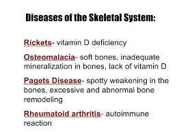 human skeletal system movement and locomotion osteoporosis 29 40 84 92 47
