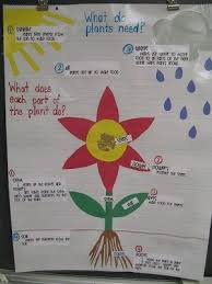 What Do Plants Need Parts Of A Plant Anchor Chart By