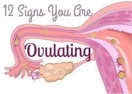 Ovulation Chart Boy Girl Pin On Pregnancy