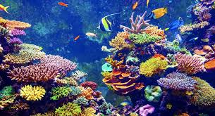 Image result for coral