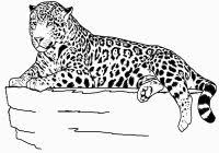 Realistic Animal Jaguar Coloring Pages For Jaguar Coloring Pages