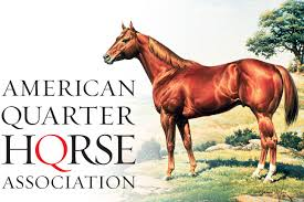 Image result for quarter horse
