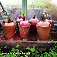 container gardening vegetables. For Small Gardens, You Can Easily Use A Watering Can. If Your Container Vegetable Gardening In Larger Garden, It Is Easier To Garden Hose Vegetables