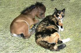 baby mini horse.  Horse Miniature Horse Getting His Meow On Baby Mini