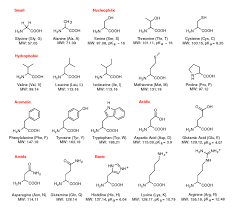 Mcat Amino Acid Chart Perfect Amino Acid Chart Circle Also Easy Amino Acid Chart