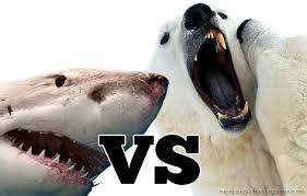 great white shark vs polar bear great white shark vs polar bear photo 1