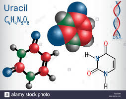 Nucleic Acid Structure Stock Photos Nucleic Acid Structure Stock