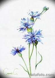 эскиз для тату цветок василек 31052019 078 Sketch Tattoo