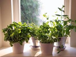 Indoor Kitchen Gardens Grow A Indoor Herb Garden Hgtv