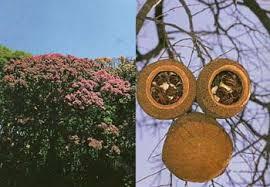 Rio Urubaxi - Um pedaço da Amazônia [Fim] Images?q=tbn:ANd9GcTVC7uvK6hjVaMYw3ZNDkVPSjYINlQ6WujEx7cVSq5jB3NJw25B