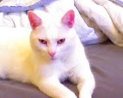 Reva Sims, Bushwick, Brooklyn, NY   Cats, Animals, Sims