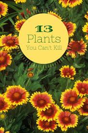 13 no kill plants for beginners easy to grow flowersflowers