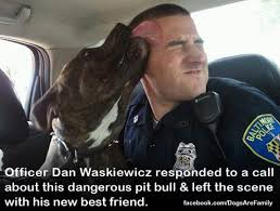 dogs animal cruelty animal rights pitbulls coexist Animal Rescue ...