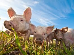 animal farm major themes critical essays cliffsnotes sparknotes animal farm study questions essay topics