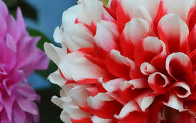 10 free hd flower wallpaper for windows8
