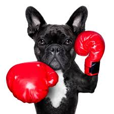 dog fights image   dog show pictures    how to avoid and stop fights between dogs animal health care pc inside dog fights