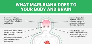 what does weed do to ur body