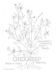Chickweed Tolerance Coloring Page My Soulflower