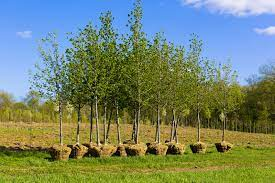 plant trees in texas