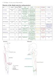 Leg Muscle Innervation Chart C Riedinger An Easy Way To Learn Musclesmuscles Of The