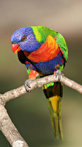 Parrot – Mobile Wallpapers