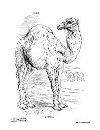 Small Picture Color in a Camel from an Antique Coloring Book Miss Marys Gazette