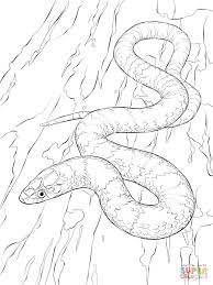 Small Picture Scarlet Kingsnake Download Coloring Pages Animal Photos of