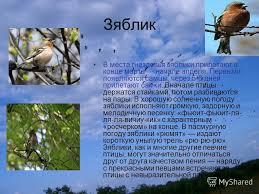Презентация на тему Перелётные птицы Выполнили ученики класса  4 Зяблик